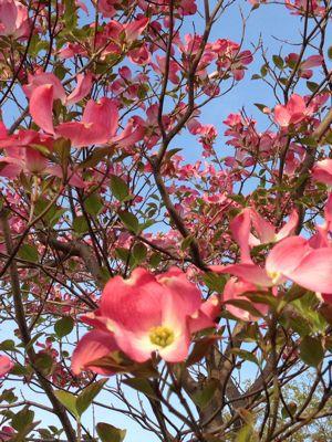 母の日のアレンジ〜市の講習会_f0155431_21493733.jpg