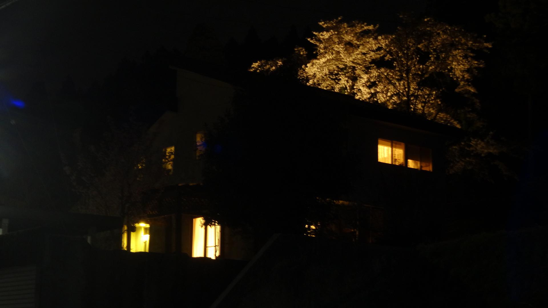 ライトアップ 桜_b0288732_22434479.jpg