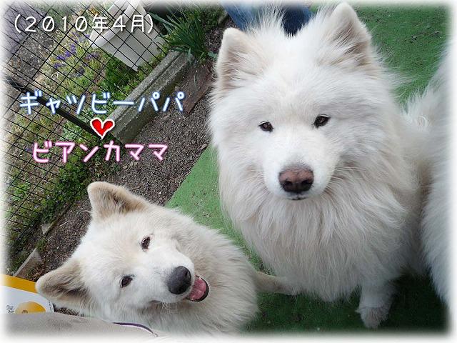 春眠_c0062832_9104314.jpg