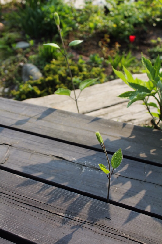 今朝の庭_b0132338_09155580.jpg