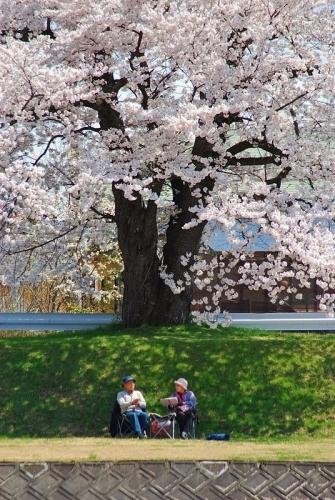 桜の木の下で_b0314043_07465909.jpg