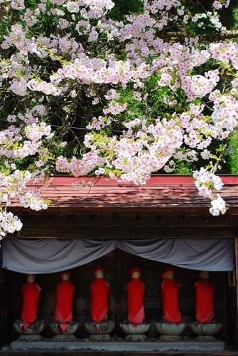 桜の木の下で_b0314043_07473942.jpg
