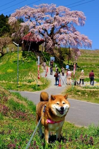 春笑う_b0314043_07505293.jpg