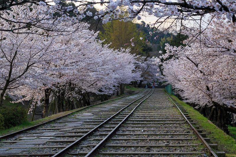 蹴上インクライン・桜並木_f0155048_2328395.jpg