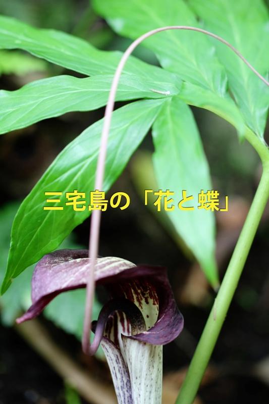 b0144049_2011202.jpg