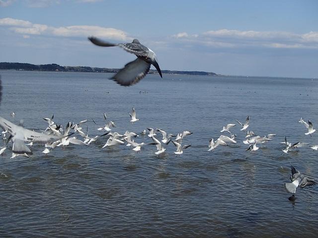 琵琶湖へ行く  (デビュー戦・・・  e.t.c...)_d0105967_16455873.jpg