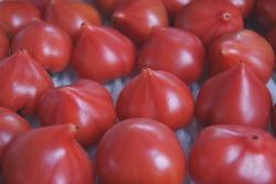 究極の野生派トマト 四万十川の「狼桃トマト」_b0246670_2335187.jpg