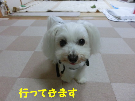 b0193480_1604968.jpg