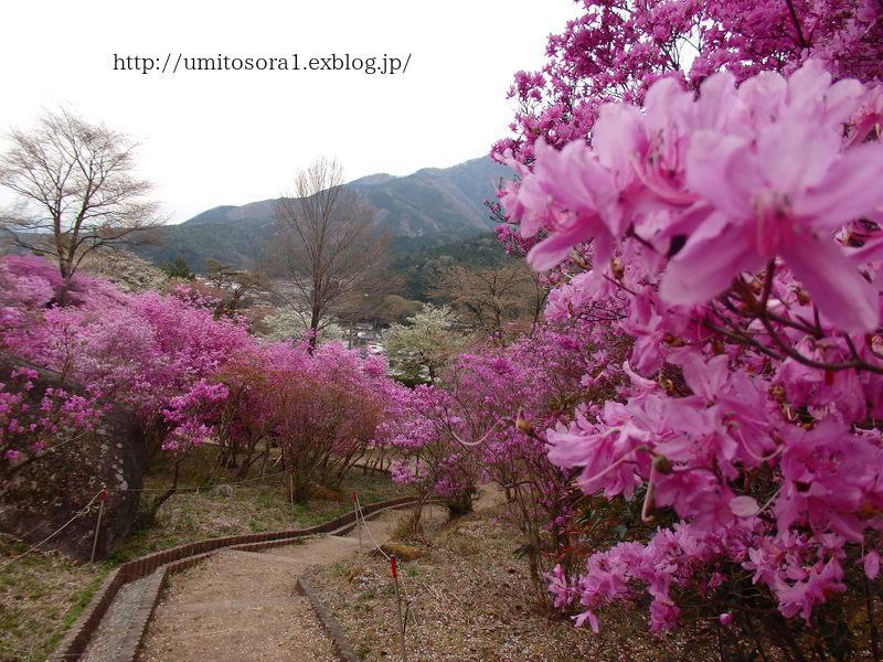 ミツバツツジが咲いてました_b0324291_21085823.jpg