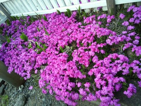 会社の花々_c0066693_1833261.jpg