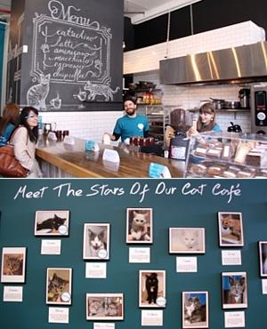 NY初の猫カフェ(Purina One Cat Café)に行ってきました #CatCafe_b0007805_1201384.jpg