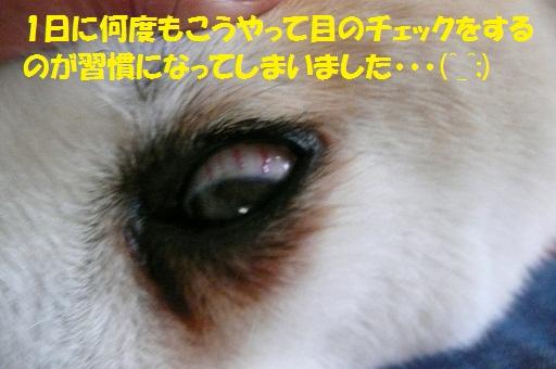 f0121712_6143657.jpg