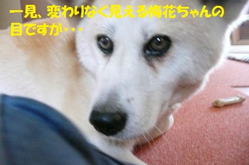 f0121712_614699.jpg