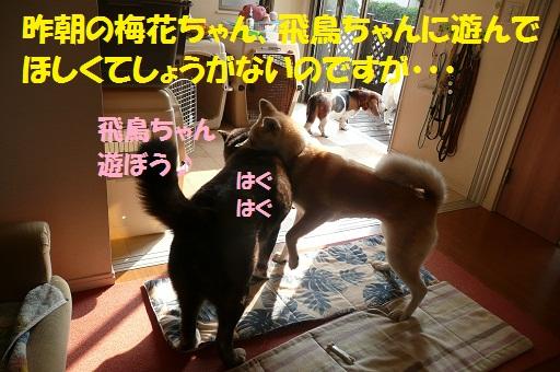 f0121712_69967.jpg