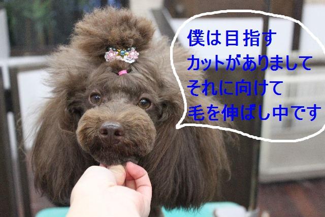 好評♪_b0130018_22465767.jpg