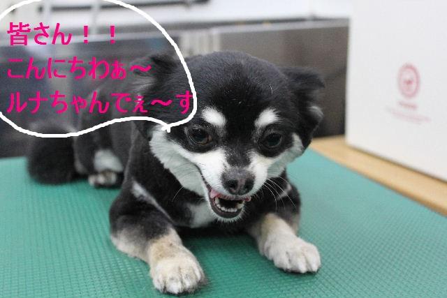 好評♪_b0130018_2322627.jpg