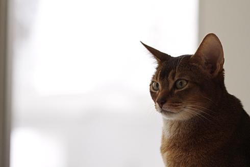 [猫的]ヨーグルト_e0090124_22351495.jpg