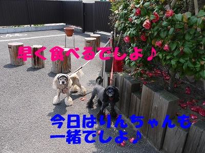 f0326925_23122467.jpg