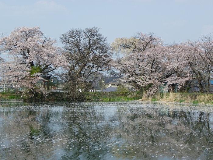 ヒメギフチョウ 更に長野県を北上してみました_d0254540_3165282.jpg