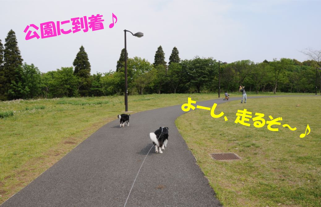 c0147241_20251913.jpg
