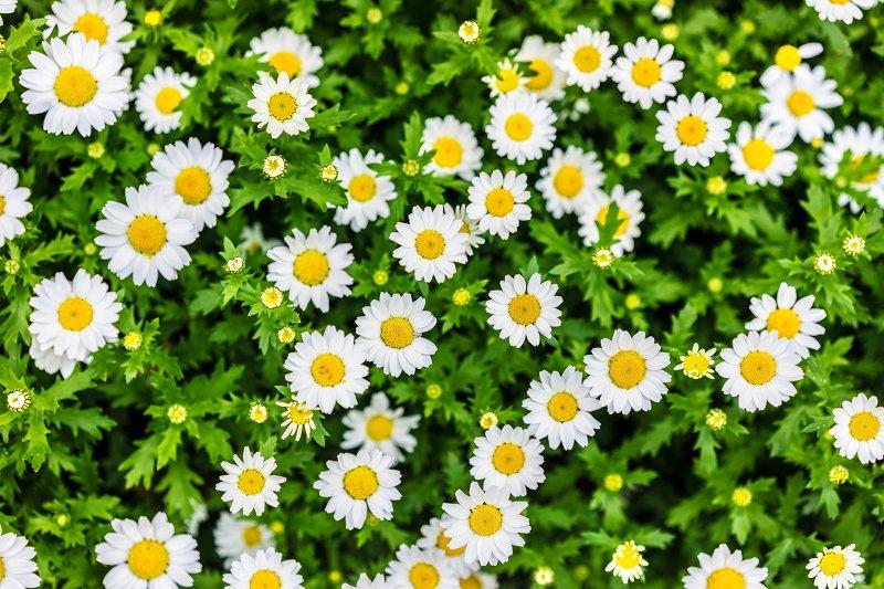 f0002946_20071552.jpg