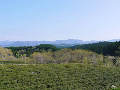 リンゴの花と株式会社旬援隊の敷地内の様子_a0254656_18263716.jpg