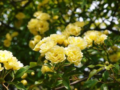 リンゴの花と株式会社旬援隊の敷地内の様子_a0254656_19275415.jpg