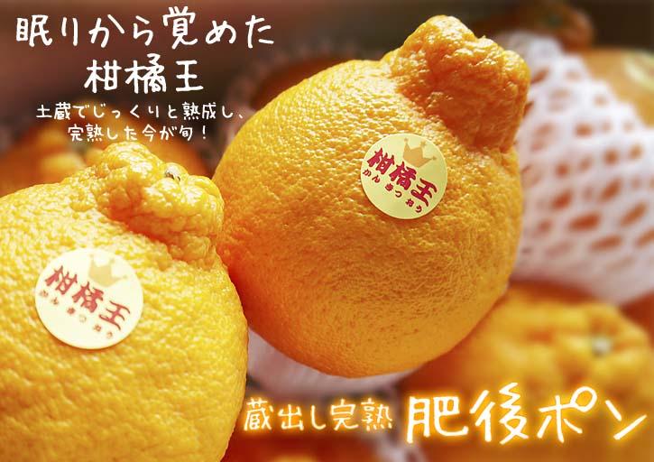リンゴの花と株式会社旬援隊の敷地内の様子_a0254656_19565547.jpg