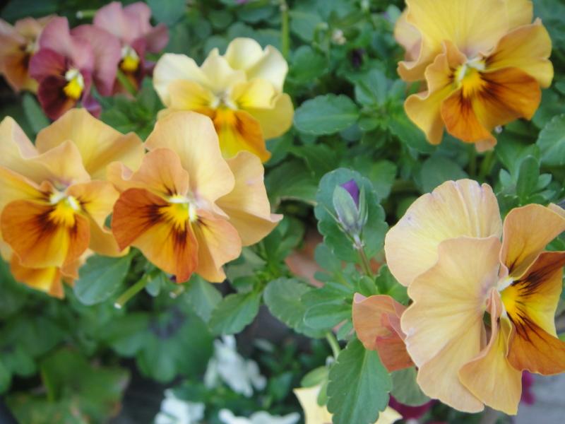 夏野菜植付準備に少々あわてている_c0108460_20415570.jpg