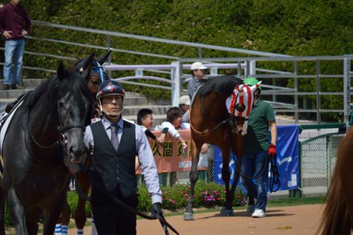 京都競馬場_e0331868_16204817.jpg