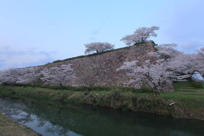 桜 2014 丹波                   _f0021869_22583570.jpg