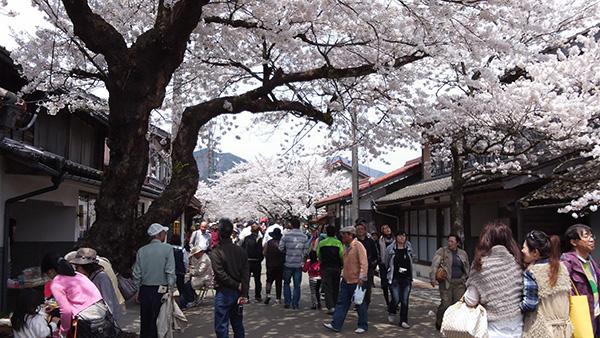 新庄村の名所「がいせん桜通り」_e0173183_1125864.jpg