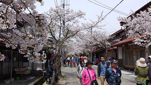 新庄村の名所「がいせん桜通り」_e0173183_1131132.jpg