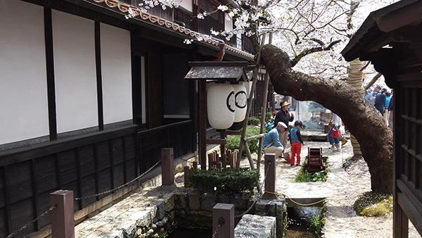 新庄村の名所「がいせん桜通り」_e0173183_1132384.jpg