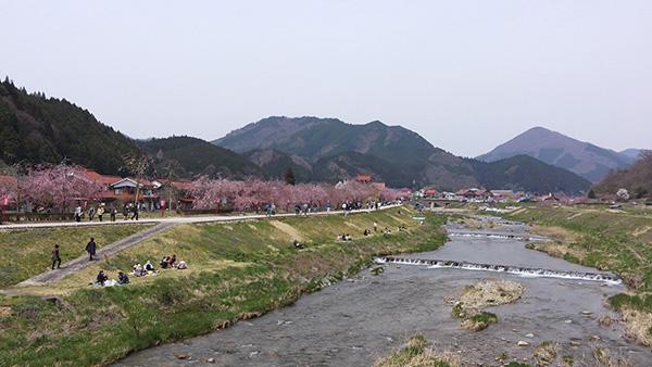 新庄村の名所「がいせん桜通り」_e0173183_1141020.jpg
