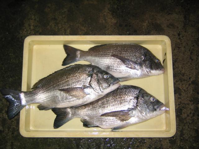 小魚釣れ始めました。_a0291590_2071454.jpg