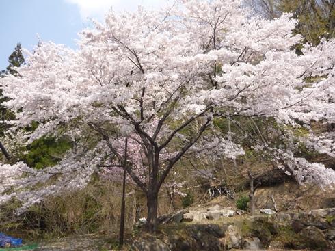 山を越えると桜が咲いている_f0227395_142849.jpg