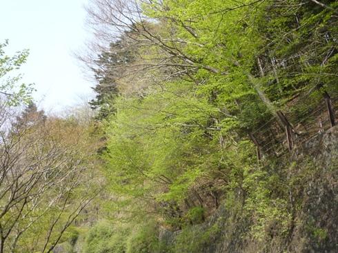 山を越えると桜が咲いている_f0227395_14285463.jpg