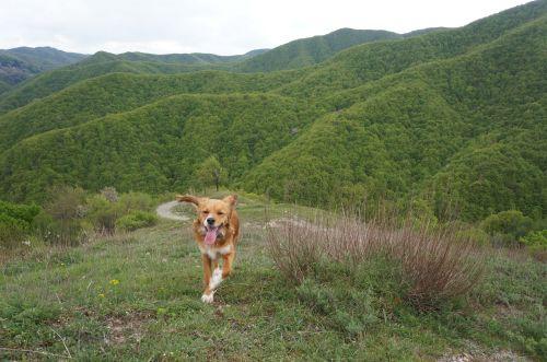 トレッキング犬ラーラ_f0106597_22164781.jpg