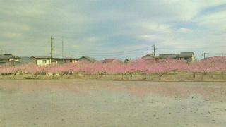 桃色の空気_c0289116_20221315.jpg