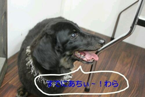 b0130018_16154956.jpg