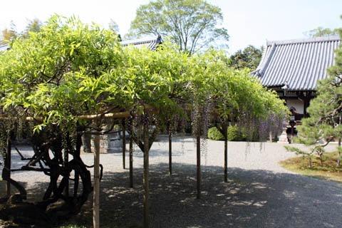 醍醐寺の藤の花_b0199526_5184250.jpg