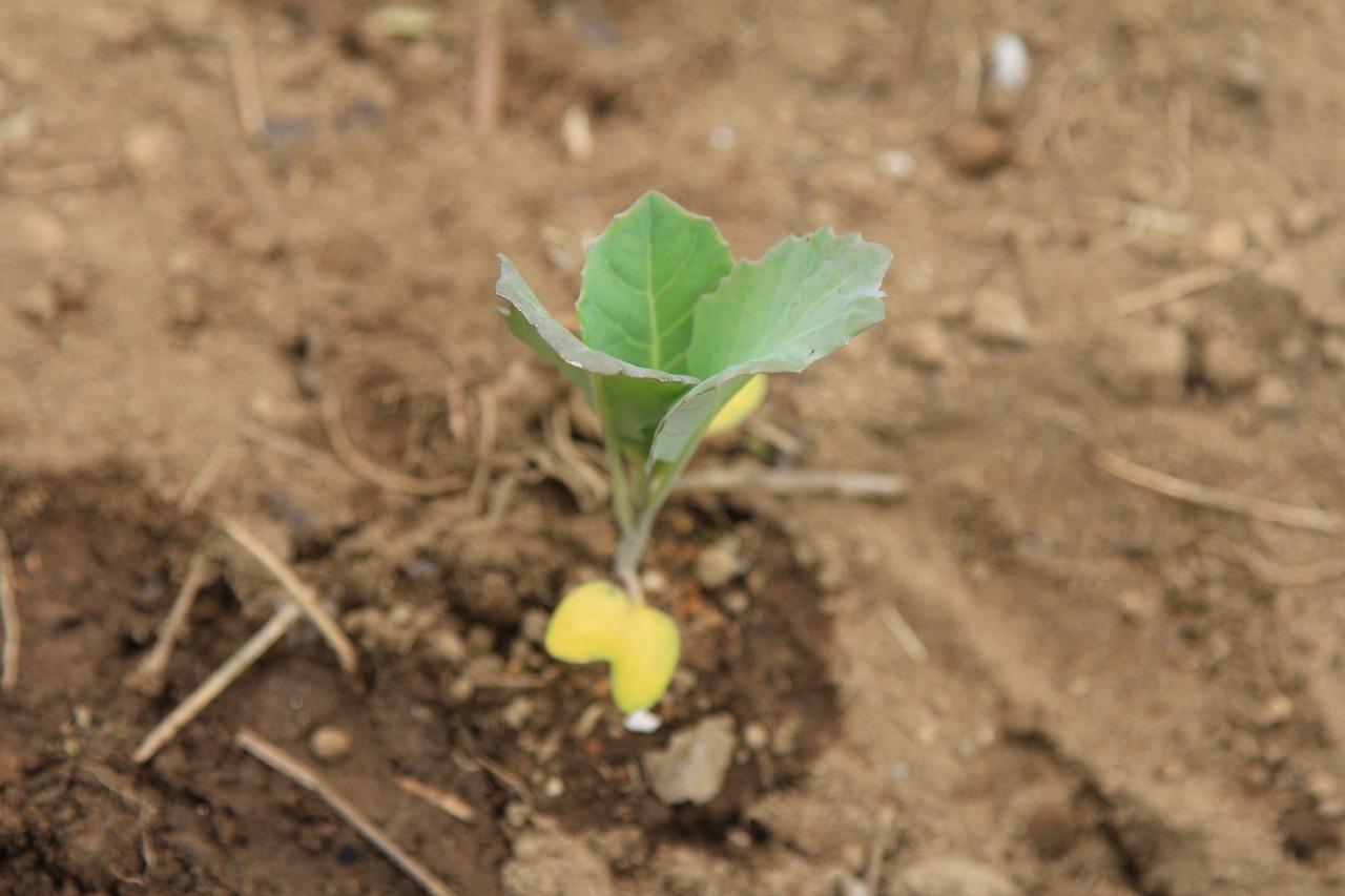 教え、教えられて、農園記念日_f0225627_14549.jpg