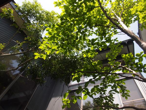 新緑☆_c0152341_11321140.jpg
