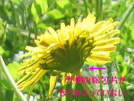 c0006757_2192371.jpg