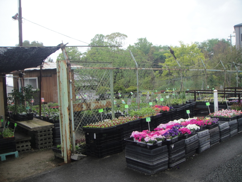 夏野菜の植え付けが ようやく終わりました_c0108460_20425928.jpg