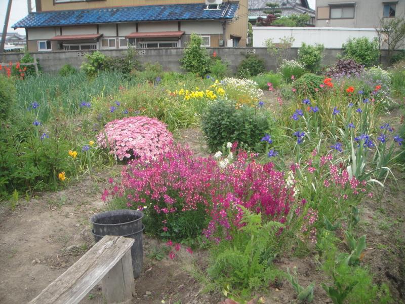 夏野菜の植え付けが ようやく終わりました_c0108460_20435334.jpg