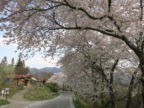 PANI『茶房パニ』でお花見ランチ♪ @上田_f0236260_12132417.jpg