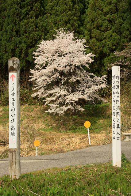 高城長禅寺の桜_a0267861_19442655.jpg