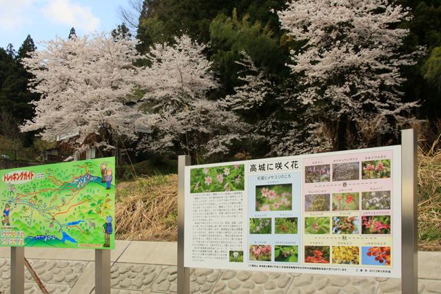 高城長禅寺の桜_a0267861_19444171.jpg